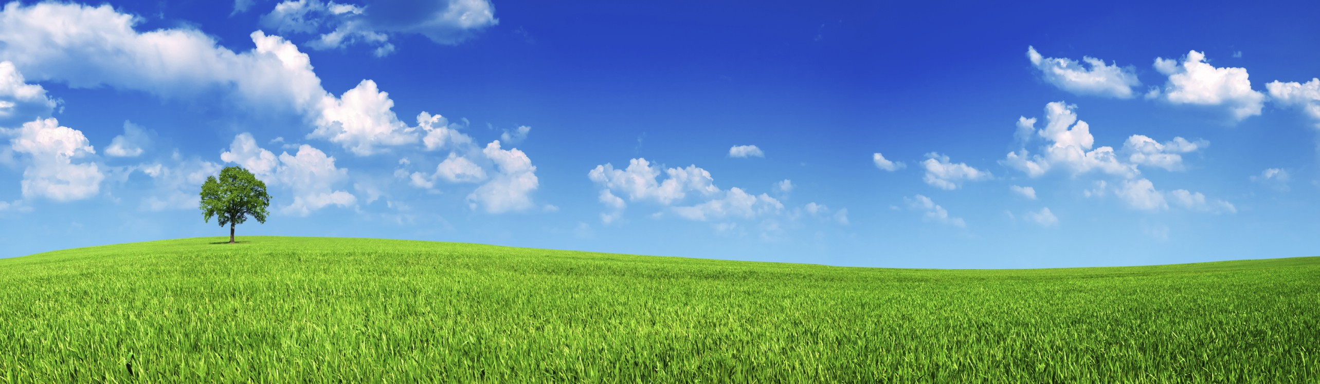 panoramic shot of beauty meadow with blue sky